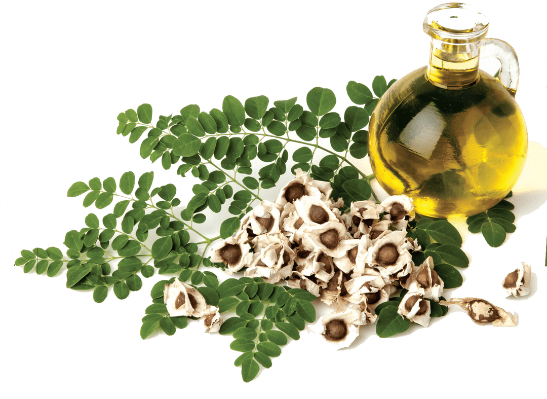 Moringa oil has many uses