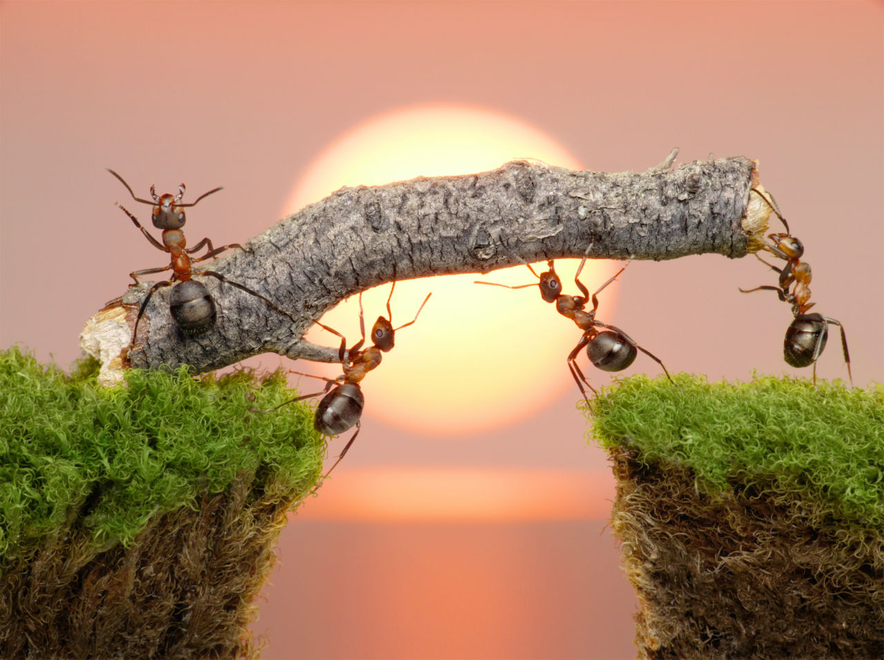 The Ant and the Kingdom of Heaven