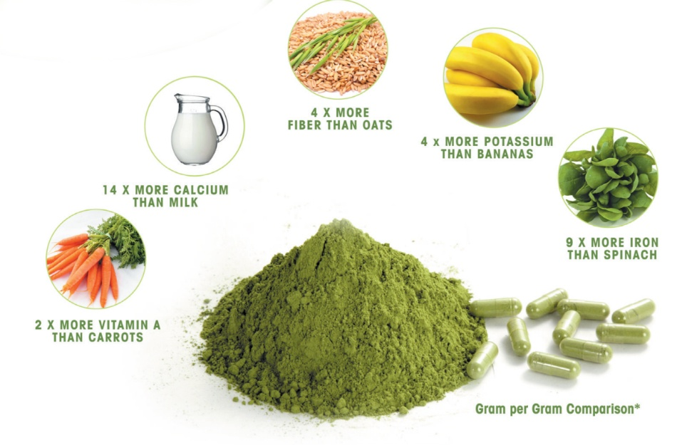 The Miracle Tree and the Moringa Seed