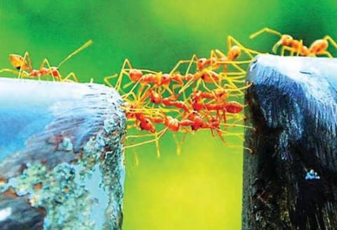 Ants work together as a team